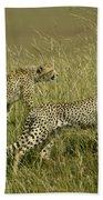 Stalking Cheetahs Beach Towel