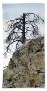 Stalwart Pine Tree Beach Towel