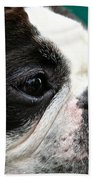 Stanley's Head Study Beach Towel