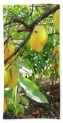 Star Fruit Belongs To The Plant Family Beach Towel
