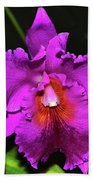 Star Of Bethlehem Orchid 006 Beach Towel