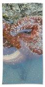 Starfish Sandwhich Beach Towel