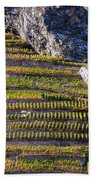 Steep Slope Viticulture In Valais Canton Beach Towel