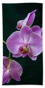 Stem Of Orchids  Beach Towel