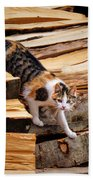 Stepping Down - Calico Cat On Beech Woodpile Beach Sheet