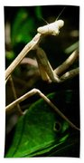 Stick Insect Beach Towel