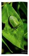 Stink Bug On Leaf Beach Towel