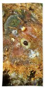 Stonefish Beach Towel