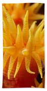 Stony Cup Coral Beach Towel