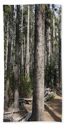 Storm Point Trail Forest Beach Towel