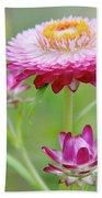 Strawflower Blossoms Beach Towel