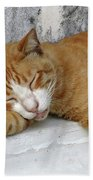 Stray Cat Sleeps On The Floor-1 Beach Towel