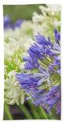 Striking Blue And White Agapanthus Flowers Beach Sheet