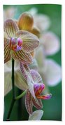 Striped Orchid 1 Beach Towel