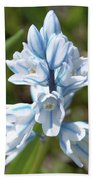 Striped Squill Emerging Beach Towel