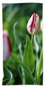 Striped Tulips In Spring Beach Towel