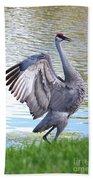 Strutting Sandhill Crane Beach Towel by Carol Groenen