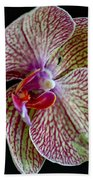 Study Of An Orchid 2 Beach Towel