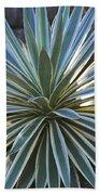 Stunning Agave Plant Beach Towel