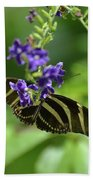 Stunning Black And White Zebra Butterfly In The Spring Beach Towel