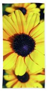 Stunning Black Eyed Susan  Beach Towel