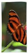 Stunning Oak Tiger Butterfly Resting On Flowers Beach Towel
