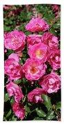 Stunning Pink Roses Beach Towel