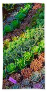 Succulent 1 Beach Towel