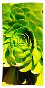 Succulent Close Up Beach Towel