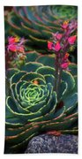 Succulent Flowers Beach Towel