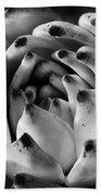 Succulent Petals Black And White Beach Towel by Kelley King
