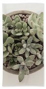 Succulent Plant From The Top Beach Towel