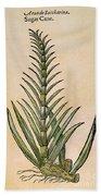 Sugar Cane, 1597 Beach Towel