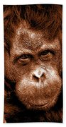 Sumatran Orangutan Female Beach Towel