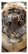 Sumatran Tiger-1440 Beach Towel