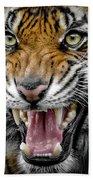 Sumatran Tiger Snarl Beach Towel