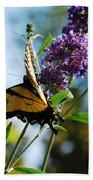 Summer Swallowtail Beach Towel