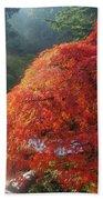 Sun Rays Over Old Japanese Maple Tree Beach Sheet