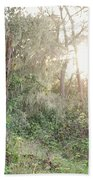 Sun Shining Through Trees In A Mysterious Forest Beach Towel