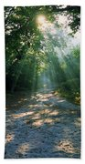 Sunbeams Through Trees Beach Towel