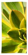 Sunburst Succulent Close-up 2 Beach Towel