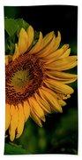 Sunflower 2017 11 Beach Towel