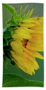 Sunflower 2017 2 Beach Towel
