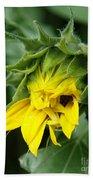 Sunflower Bud Beach Towel