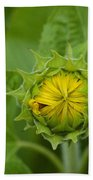 Sunflower Bud Beach Towel