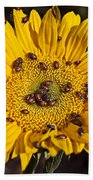 Sunflower Covered In Ladybugs Beach Sheet