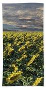 Sunflower Fields Near Denver International Airport Beach Towel