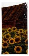 Sunflower Morning With Barn Beach Towel