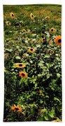 Sunflower Stalks Beach Towel