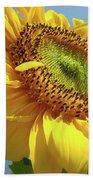 Sunflower Sunlit Sun Flowers 6 Blue Sky Giclee Art Prints Baslee Troutman Beach Towel